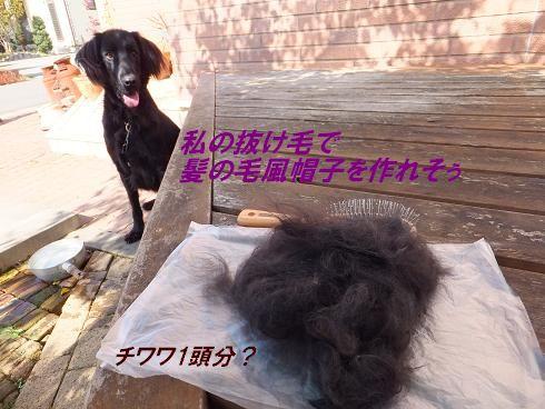 f0179203_824840.jpg