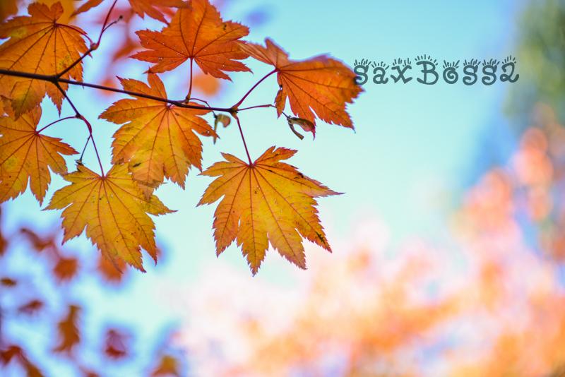 f0033205_8303321.jpg