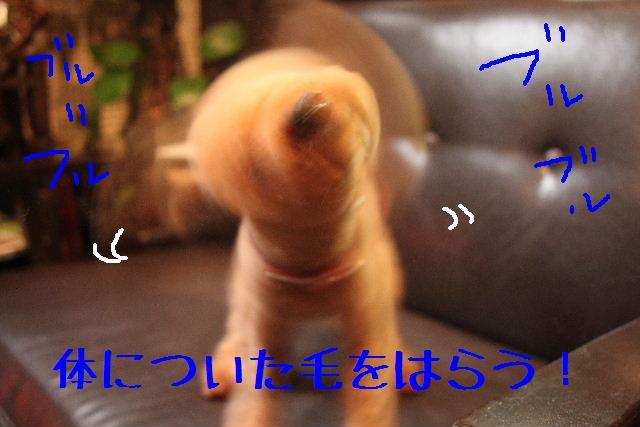 b0130018_121676.jpg