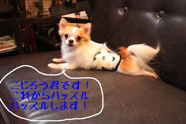 b0130018_1251033.jpg