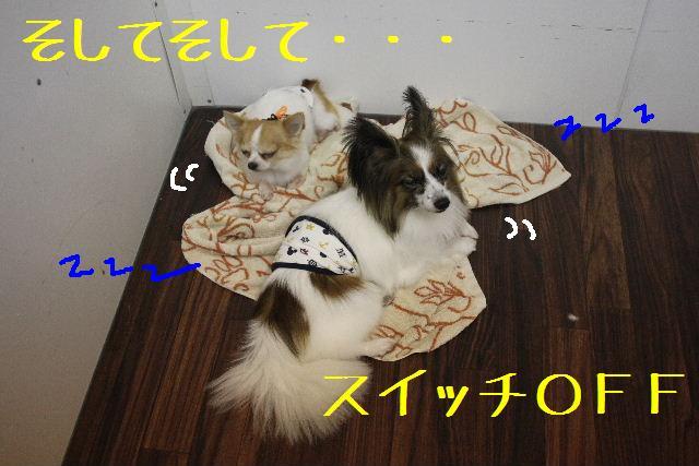 b0130018_1254089.jpg