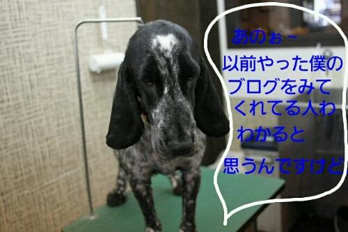 こんばんわ♪_b0130018_2014394.jpg