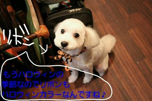 こんばんわ♪_b0130018_20334196.jpg