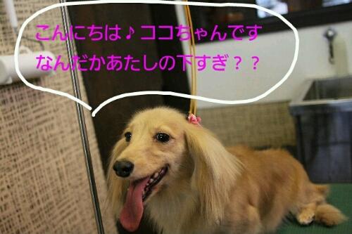 こんばんわ♪_b0130018_2039740.jpg