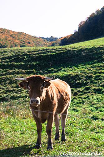 こげ茶色の牛さんたち_c0024345_646244.jpg
