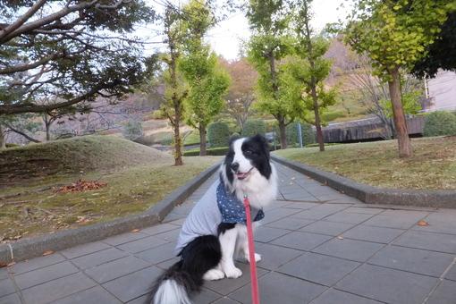 雪の富士山_b0177649_2364964.jpg