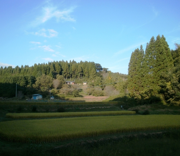 「天使の舞い降りる丘」全景です♪_a0174458_016698.jpg