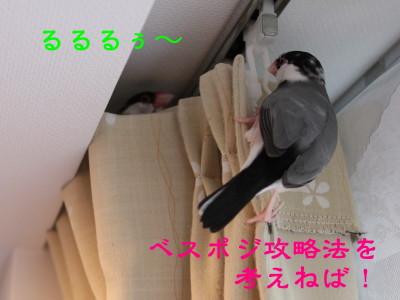 b0158061_20385473.jpg