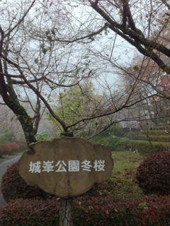 神川町冬桜祭りありがとう!_e0261371_11454670.jpg