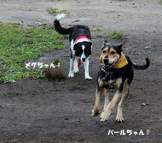 メグちゃん&パールちゃん_c0155902_20133273.jpg