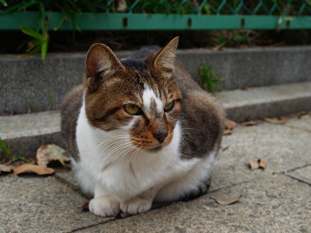 江ノ島の猫_e0004009_1531688.jpg