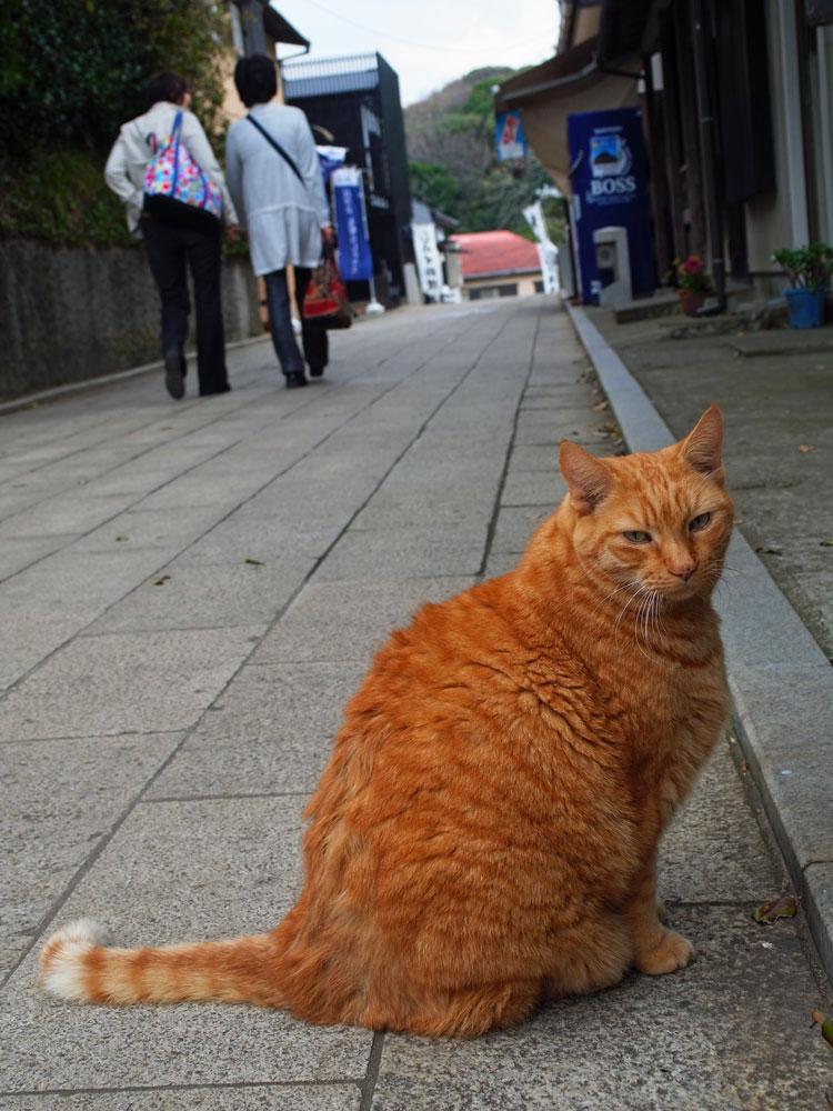 江ノ島の猫_e0004009_154190.jpg
