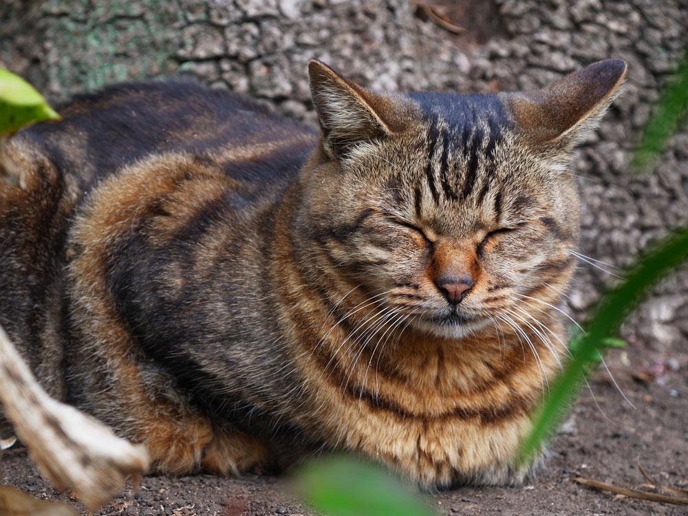 江ノ島の猫_e0004009_1544267.jpg