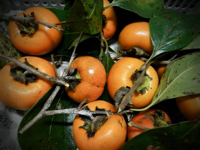 2012渋柿の「干し柿」作り☆_a0125419_1835061.jpg