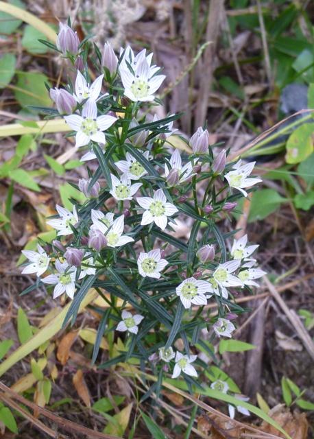 青麻山で見た植物_b0189727_13514950.jpg