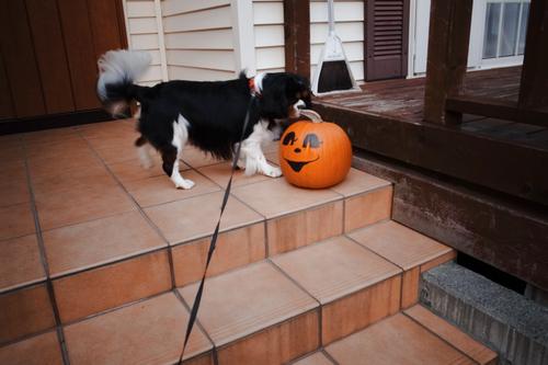 ハローウィンなかぼちゃ。_c0051132_2145158.jpg
