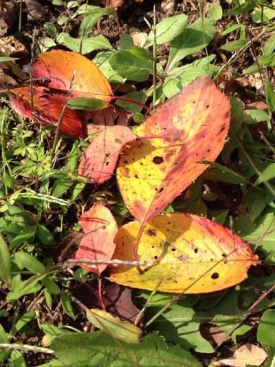 /// 清正公園が少しずつ、秋色になりました ///_f0112434_13241114.jpg