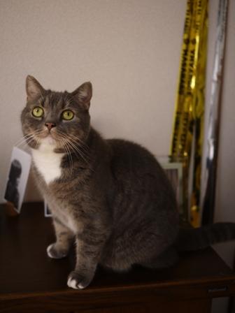 猫のお友だち スコティーちゃんナノちゃん編。_a0143140_164856.jpg