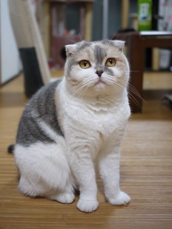 猫のお友だち スコティーちゃんナノちゃん編。_a0143140_171379.jpg