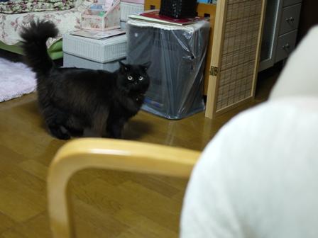 猫のお友だち モコちゃん編。_a0143140_21362765.jpg