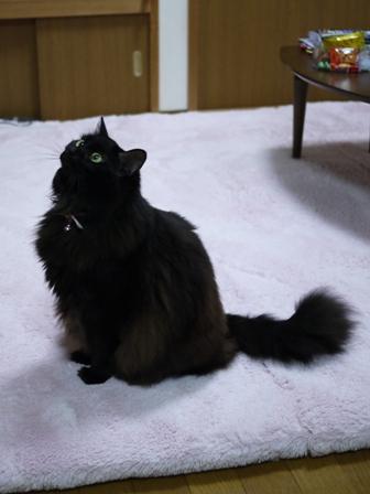 猫のお友だち モコちゃん編。_a0143140_21373835.jpg