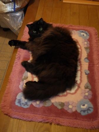 猫のお友だち モコちゃん編。_a0143140_21411062.jpg