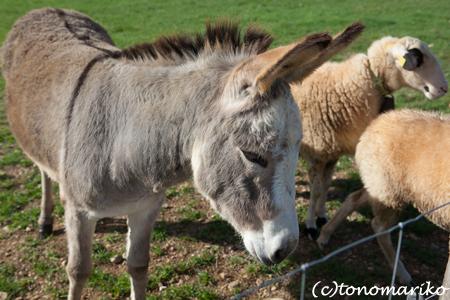 バブーに興味津々の動物たち_c0024345_7374832.jpg