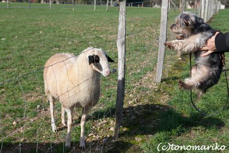 バブーに興味津々の動物たち_c0024345_7381813.jpg
