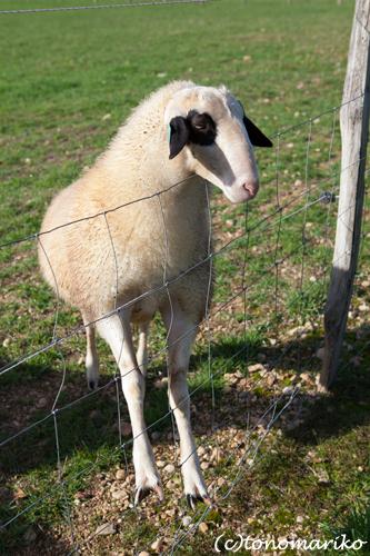 バブーに興味津々の動物たち_c0024345_738383.jpg