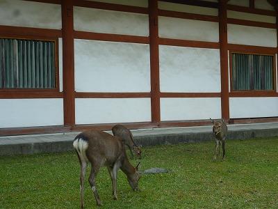 奈良へのバスツアー_c0113948_22212536.jpg
