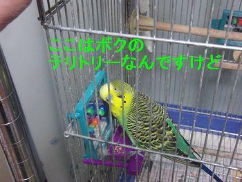 f0196665_2029941.jpg