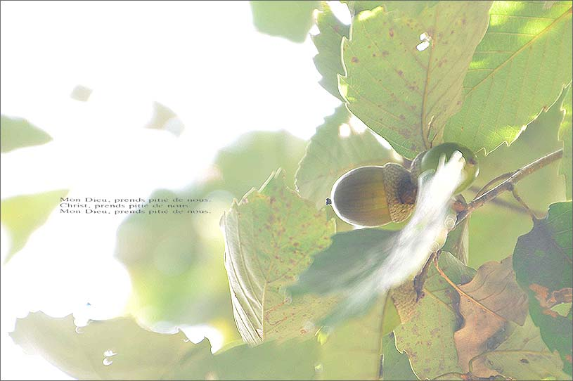 f0198771_084252.jpg