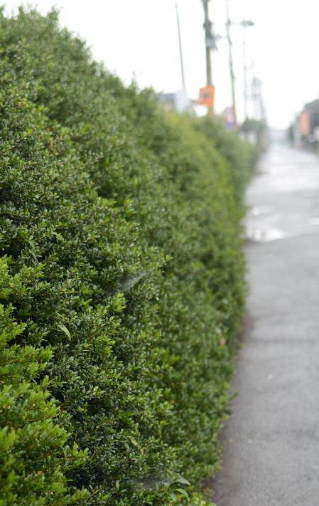 雨の中を歩く_b0194880_1043037.jpg