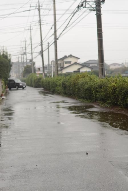 雨の中を歩く_b0194880_10433336.jpg