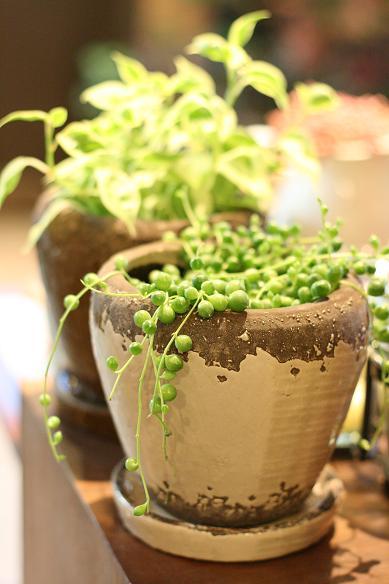 雑貨と植物とぐるり市。_c0069389_16392324.jpg