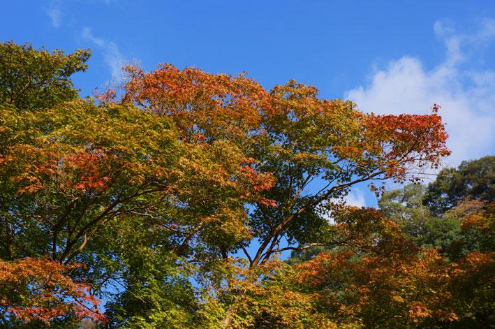 ますます紅葉する神社西_b0145296_16223844.jpg