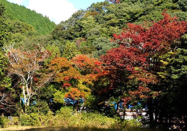 ますます紅葉する神社西_b0145296_1623490.jpg