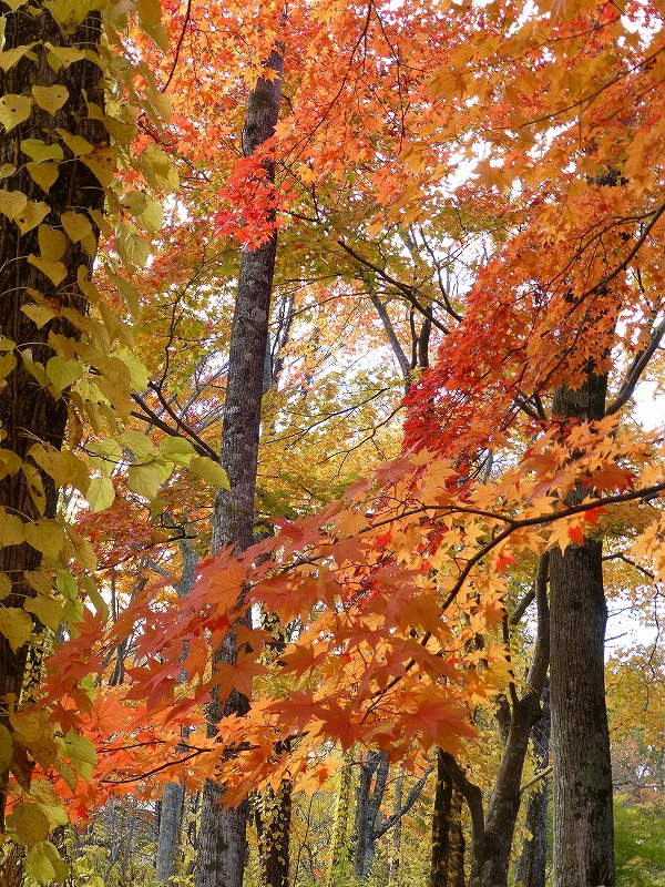 また、公園の紅葉_f0138096_0113152.jpg