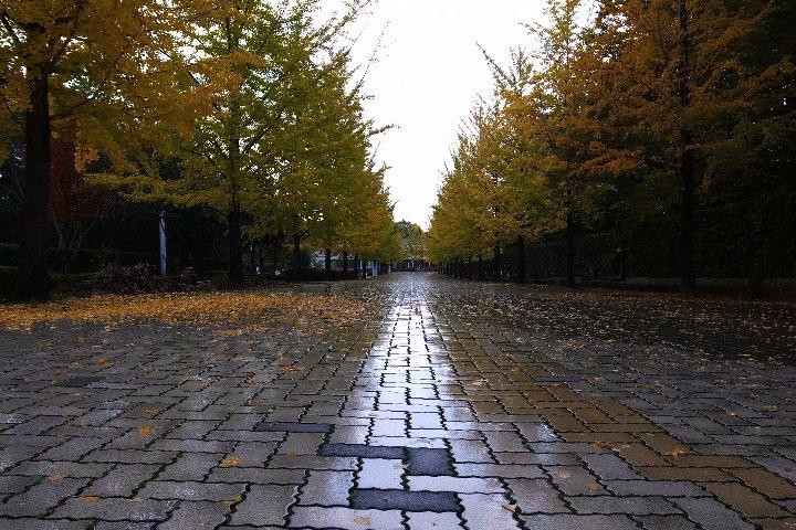 雨のスカイロード_a0268412_20511045.jpg