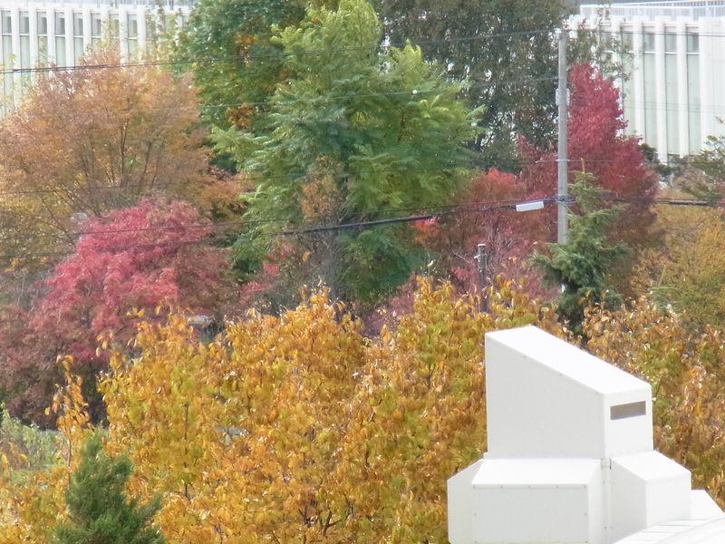 秋一色 (平地から山へ)_c0025115_1953622.jpg