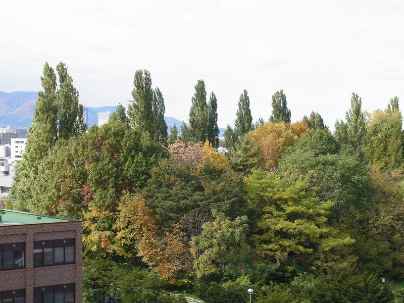 秋一色 (平地から山へ)_c0025115_1953957.jpg