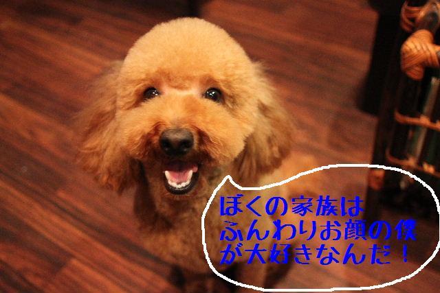 b0130018_1155337.jpg