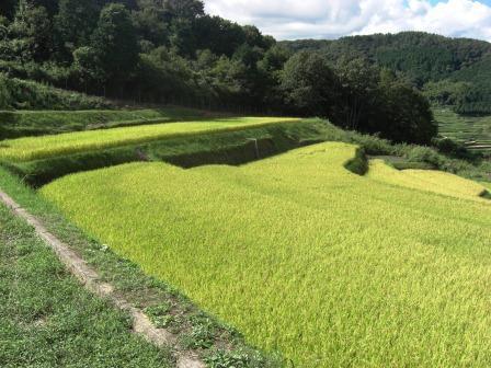 秋の旅行2012①~佐用の棚田~_b0081121_6363668.jpg
