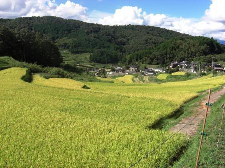 秋の旅行2012①~佐用の棚田~_b0081121_63696.jpg