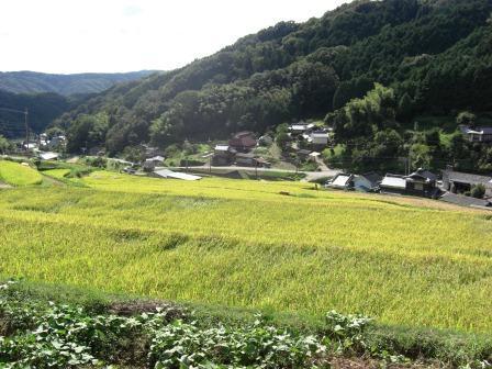 秋の旅行2012①~佐用の棚田~_b0081121_6371691.jpg