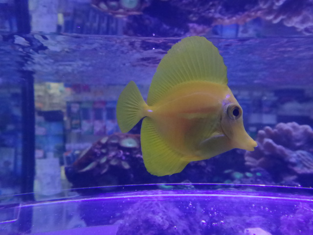 121031 海水魚・サンゴ・水草・金魚_f0189122_12575996.jpg