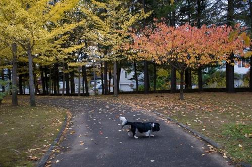 西岡公園へ_c0051132_19144678.jpg