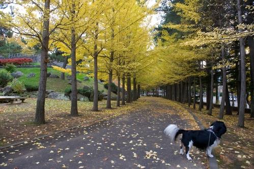西岡公園へ_c0051132_19151598.jpg
