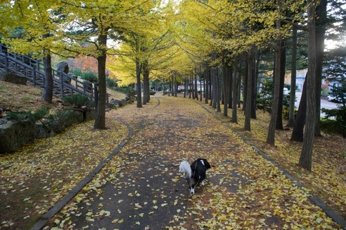 西岡公園へ_c0051132_19155410.jpg
