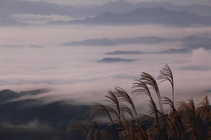 来日岳の雲海_a0294534_2136564.jpg
